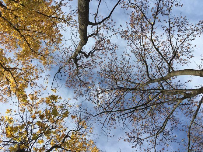 Und Gott sprach: Die Erde lasse fruchttragende Bäume auf der Erde sprießen...